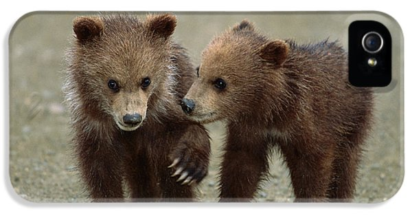 Brown Bear iPhone 5 Case - Spring Grizzly Cubs In Denali by Yva Momatiuk John Eastcott