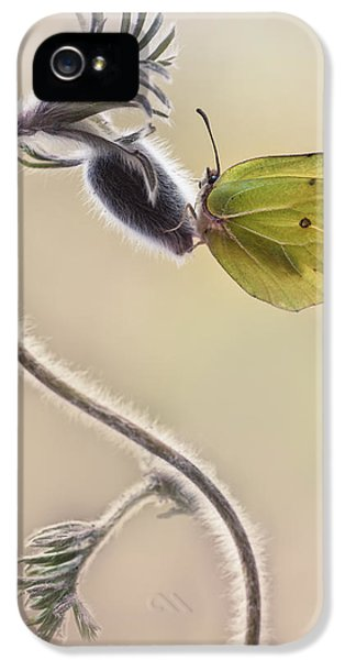 Spring Impression With Yellow Butterfly IPhone 5 Case by Jaroslaw Blaminsky