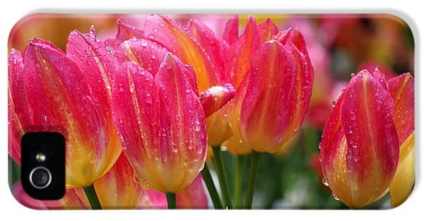 Spring Tulips In The Rain IPhone 5 Case