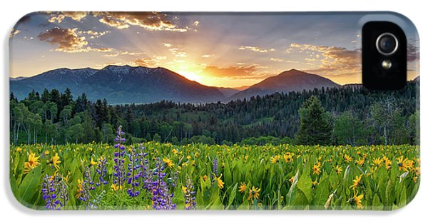 Spring's Delight IPhone 5 Case by Leland D Howard