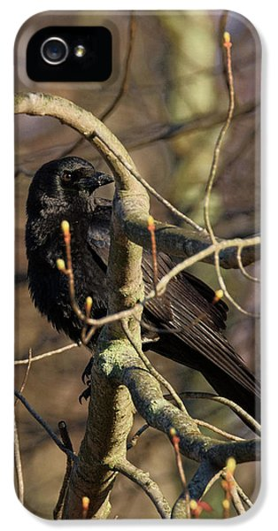 IPhone 5 Case featuring the photograph Springtime Crow by Bill Wakeley
