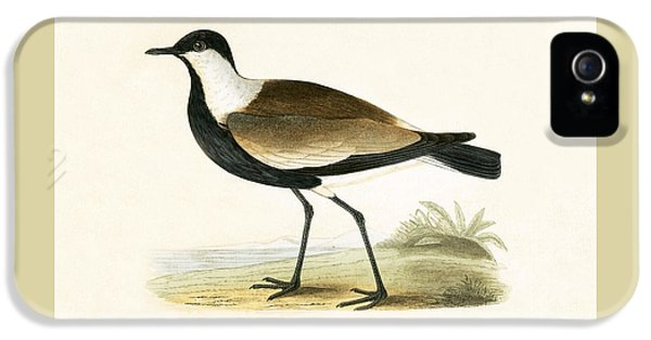 Spur Winged Plover IPhone 5 Case by English School