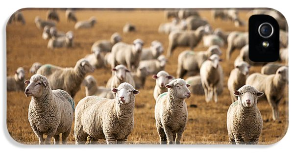 Standing Out In The Herd IPhone 5 Case by Todd Klassy