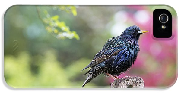 Starling  IPhone 5 Case by Tim Gainey