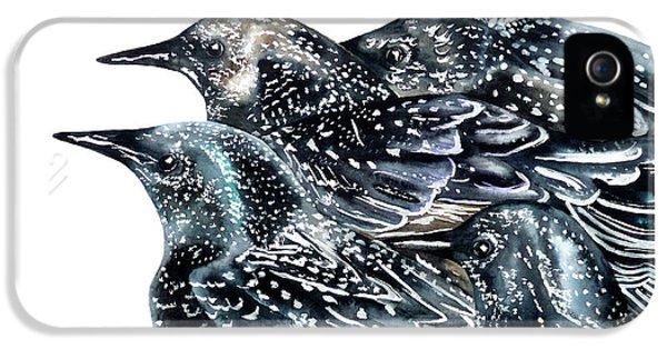 Starlings IPhone 5 Case by Marie Burke