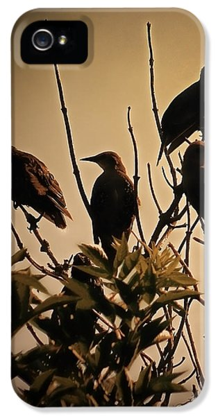 Starlings IPhone 5 Case by Sharon Lisa Clarke