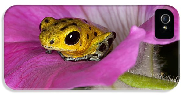 Amphibians iPhone 5 Case - Stepping Out by Janet Fikar