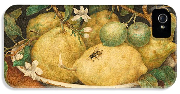 Still Life With A Bowl Of Citrons IPhone 5 Case by Giovanna Garzoni