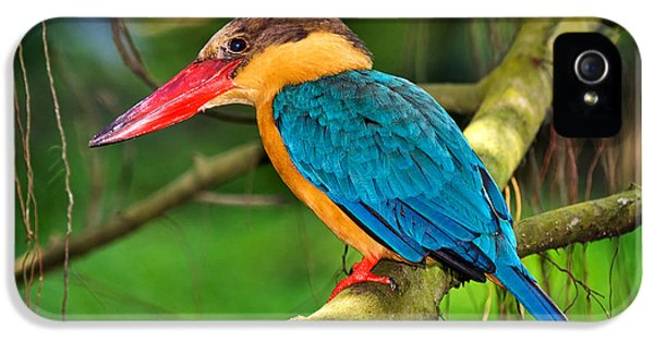 Stork-billed Kingfisher IPhone 5 / 5s Case by Louise Heusinkveld