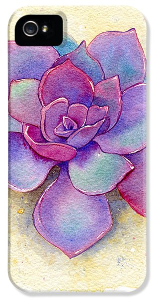 Succulent One IPhone 5 Case by Laura Nikiel