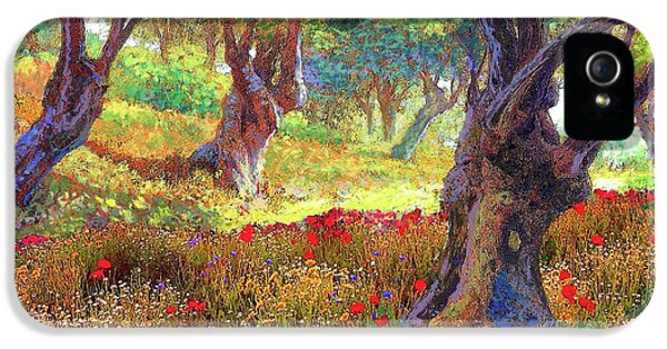 Daisy iPhone 5 Case - Tranquil Grove Of Poppies And Olive Trees by Jane Small
