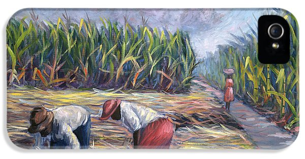 Sugarcane Harvest IPhone 5 Case by Carlton Murrell