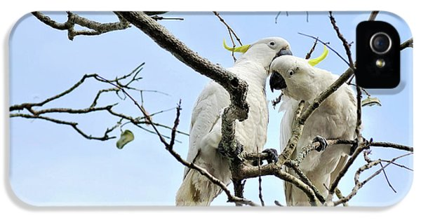 Sulphur Crested Cockatoos IPhone 5 / 5s Case by Kaye Menner