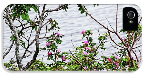 Sumac And Wild Roses IPhone 5 Case