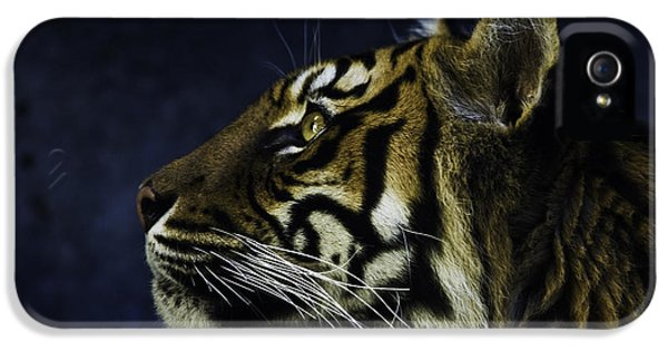 Sumatran Tiger Profile IPhone 5 Case by Avalon Fine Art Photography