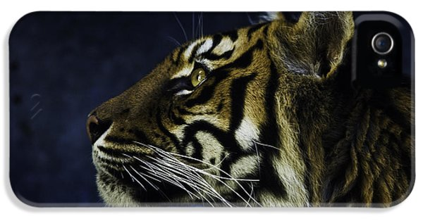 Sumatran Tiger Profile IPhone 5 / 5s Case by Avalon Fine Art Photography