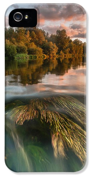 Reflection iPhone 5 Cases - Summer afternoon iPhone 5 Case by Davorin Mance