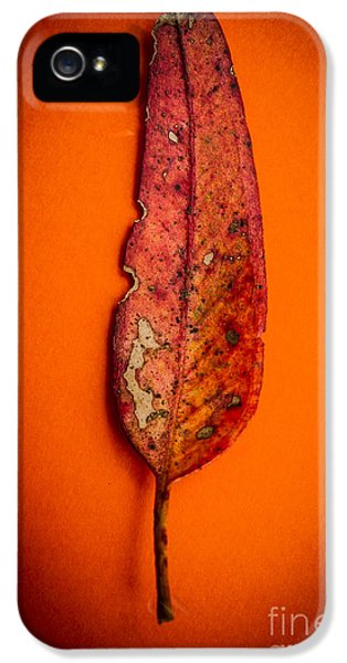 Summer In Decay IPhone 5 Case by Jorgo Photography - Wall Art Gallery