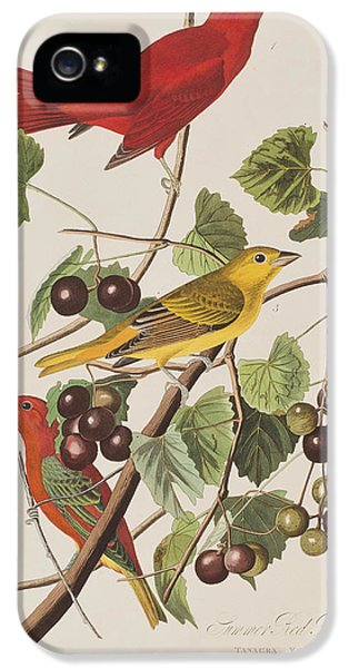 Summer Red Bird IPhone 5 Case by John James Audubon