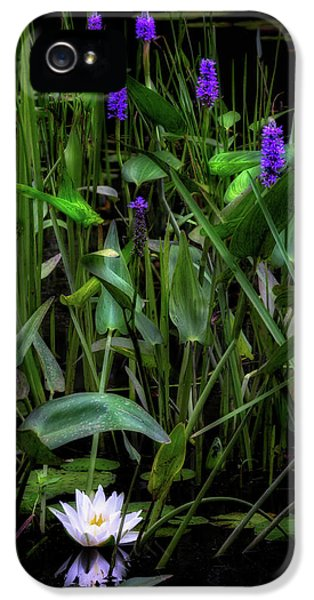 IPhone 5 Case featuring the photograph Summer Swamp 2017 by Bill Wakeley