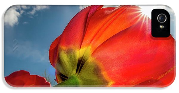 IPhone 5 Case featuring the photograph Sunbeams And Tulips by Adam Romanowicz