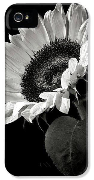 Sunflower In Black And White IPhone 5 Case by Endre Balogh