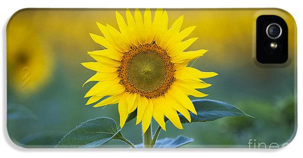 Sunflower IPhone 5 Case by Tim Gainey