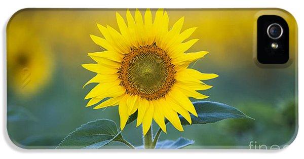 Sunflower iPhone 5 Case - Sunflower by Tim Gainey