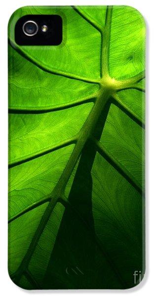 Sunglow Green Leaf IPhone 5 Case