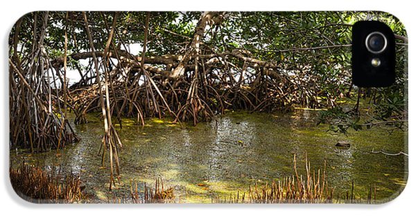 Sunlight In Mangrove Forest IPhone 5 Case by Elena Elisseeva