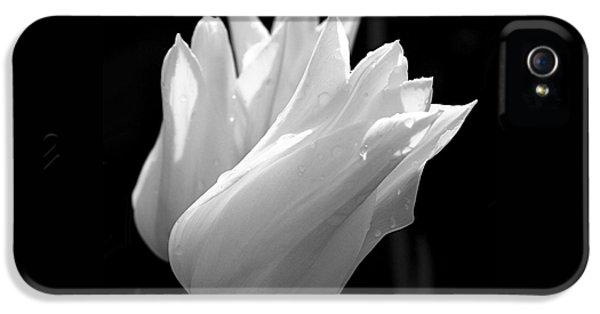 Sunlit White Tulips IPhone 5 Case