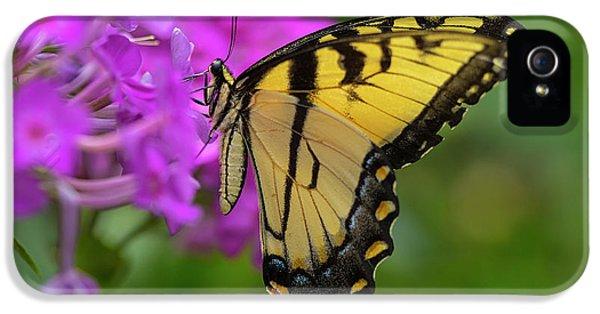 Swallowtail  IPhone 5 Case by Jeff Klingler