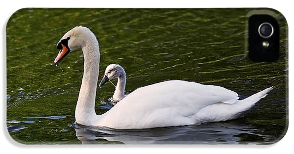 Swan Mother With Cygnet IPhone 5 Case by Rona Black