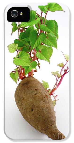 Sweet Potato IPhone 5 Case