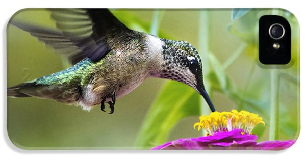 Sweet Success Hummingbird Square IPhone 5 Case by Christina Rollo
