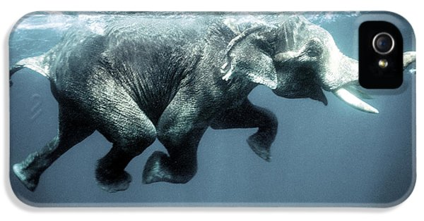 Swimming Elephant IPhone 5 Case