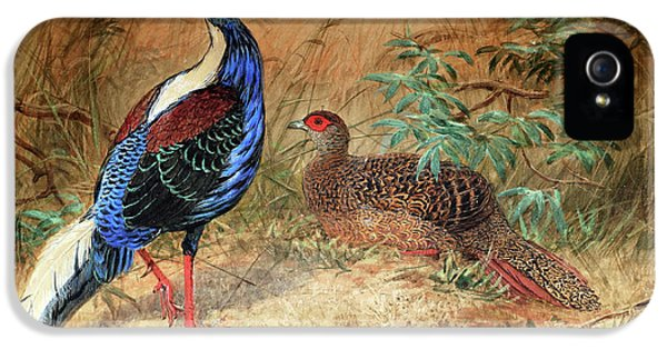 Swinhoe's Pheasant  IPhone 5 Case