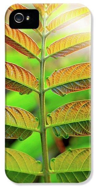 Symmetric Leaves IPhone 5 Case by Carlos Caetano