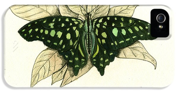 Tailed Jay Butterfly IPhone 5 Case by Juan Bosco