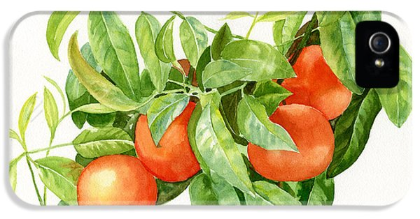 Tangerines With Leaves IPhone 5 Case by Sharon Freeman