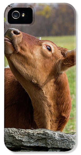 IPhone 5 Case featuring the photograph Tasty by Bill Wakeley