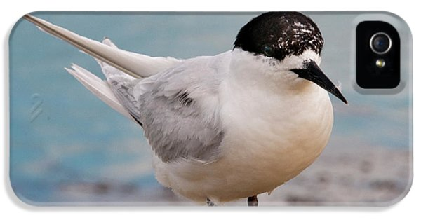 IPhone 5 Case featuring the photograph Tern 1 by Werner Padarin