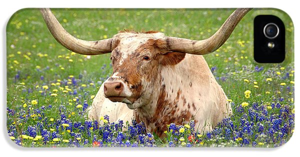 Texas Longhorn In Bluebonnets IPhone 5 Case by Jon Holiday