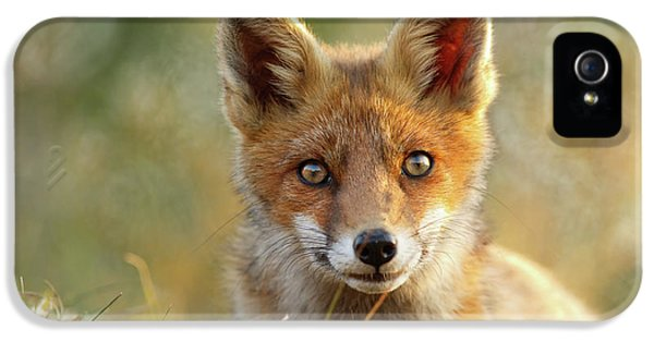 That Face - Cute Fox Kit IPhone 5 Case by Roeselien Raimond