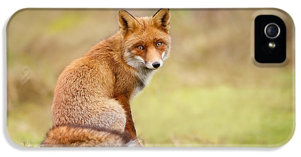 That Look - Red Fox Male IPhone 5 Case