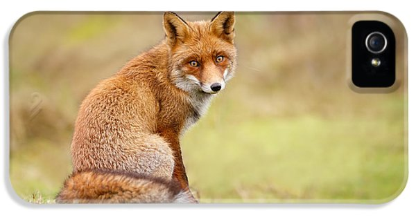 That Look - Red Fox Male IPhone 5 Case by Roeselien Raimond
