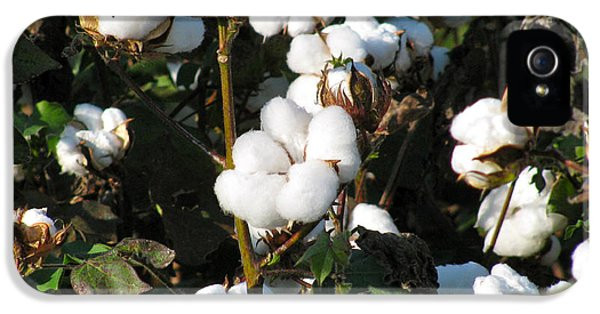 Thats A Cotton Boll IPhone 5 Case by Debra     Vatalaro