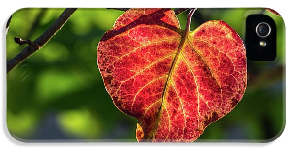 IPhone 5 Case featuring the photograph The Autumn Heart by Bill Pevlor