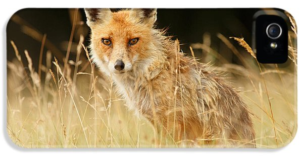 The Catcher In The Grass - Wild Red Fox IPhone 5 Case by Roeselien Raimond