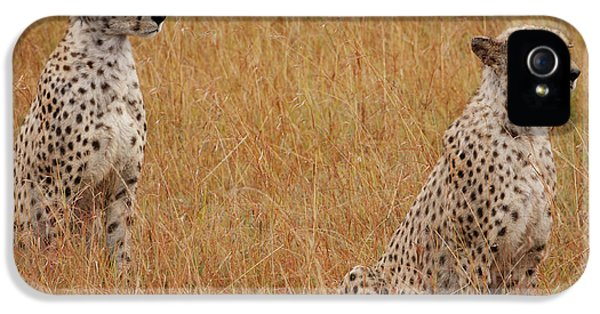 The Cheetahs IPhone 5 / 5s Case by Nichola Denny